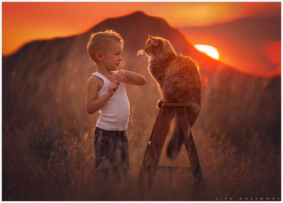 Boy plays with pet cat at sunset. LJHolloway photography is a Las Vegas Child Photographer.