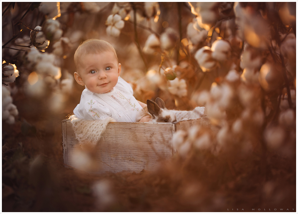 Baby girl sits in a cotton field with a baby bunny. LJHolloway photography is a Las Vegas Child Photographer.